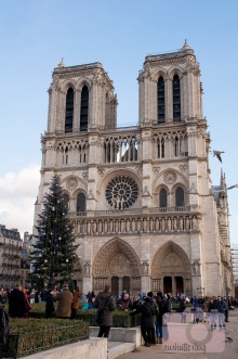 Tree in front of Notre Dame
